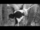 Ohio Dairy Farm Brutality