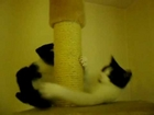 This funny and cute cat climbs the scratcher and hits the cam with her dangerous paws!