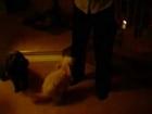 Zoe humps like a rabbit