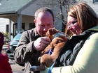 Charlie's Angels Animal Rescue transport arrives in New Hampshire