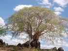 pawane musuwee